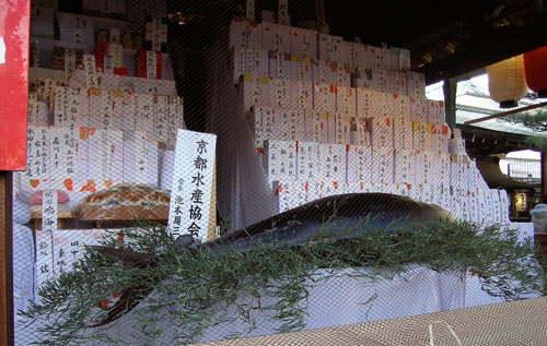 giant tuna on the altar of Ebisu shrine