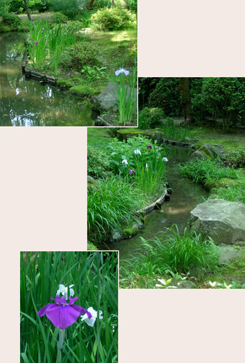 irises by the edge of stream in the garden at Heian Jingu