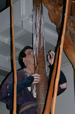 mannikin showing molding of cedar tree to create Kitayama cedar