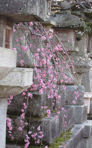 plum blossoms and stone lanterns